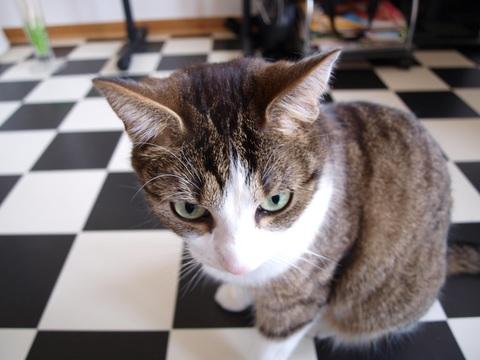懐疑する猫