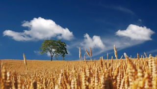 農耕の発達